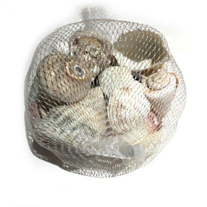 Decorative Assorted Sea Shells / Natural Beach Seashells for craft etc